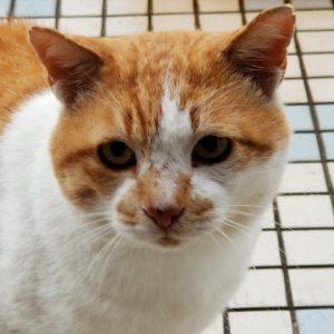 野良猫ニャンキュパー