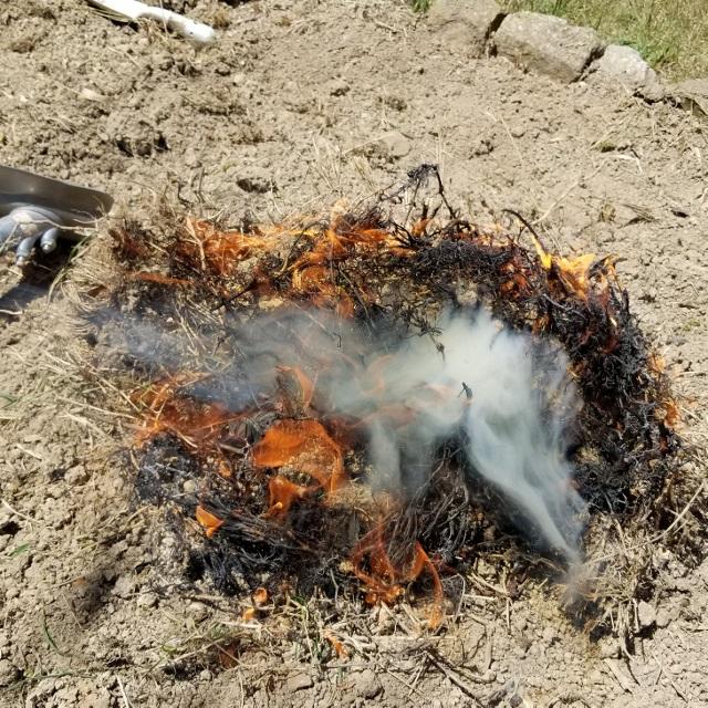 笹根は燃やす