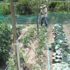 13705_家庭菜園
