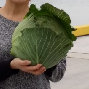 1stcabbage