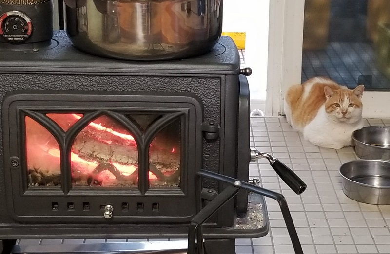 Cat's fire number_20190125_165013 (800x522)