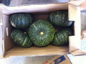 pumpkin_IMG_1852 (800x598)