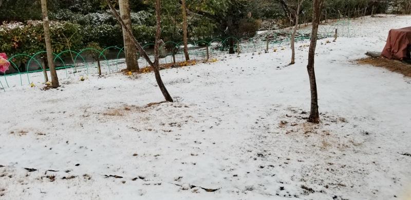 Snowy-landscape_20190211_082635 (800x389)