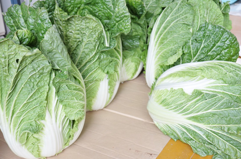 Chinese_cabbage_IMG_2098 (800x527)