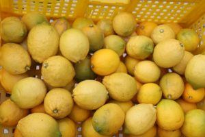 lemon_IMG_2095 (800x533)