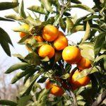 orange_IMG_2157 (640x640)