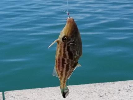fishing_20201007_112931 (640x360)