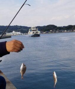 fishing_20201029_151357 (540x640)